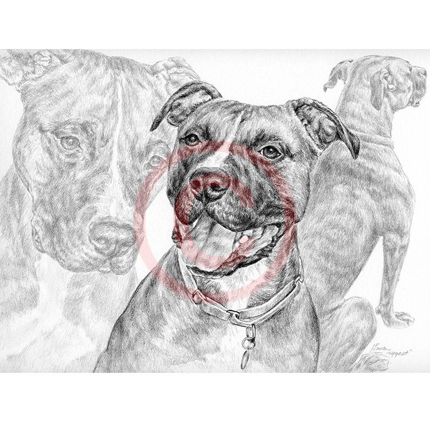 Custom Pencil Drawings And Portraits By Kelli Swan Pet