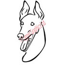 Smiling Greyhound Vector Art